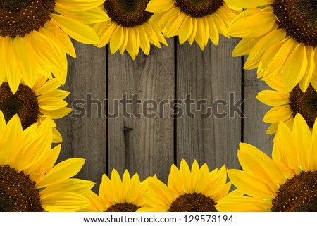 Frame of yellow sunflowers on background of old fence. - stock photo
