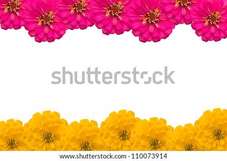 Frame of Zinnias flower - stock photo