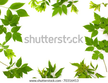 Frame photo of green leaves
