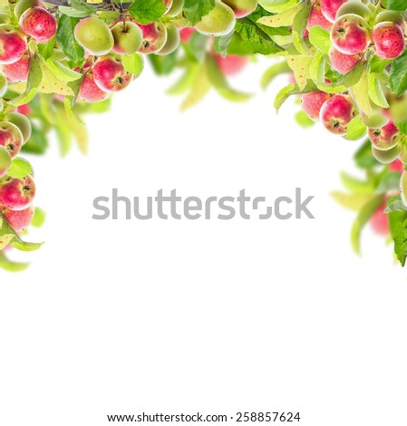 Frame with apple branch with apples and leaves, isolated on white background - stock photo