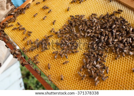 frame with bees - stock photo