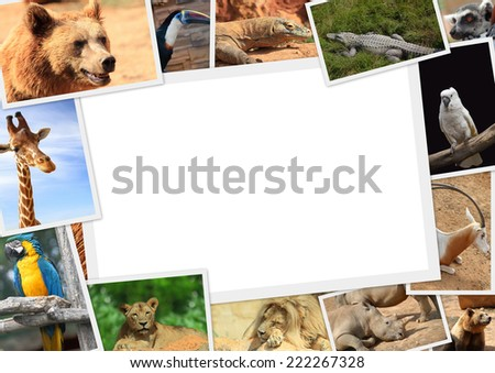 Frame with collection of wild animals photography - stock photo