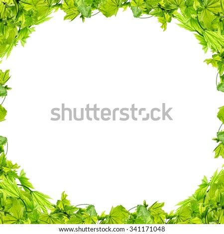 Frame with green leaves on white background