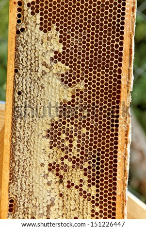 Frame with natural gold honey.