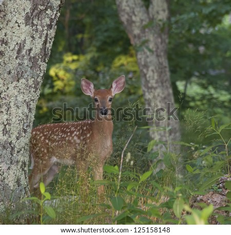 Framed fawn - stock photo