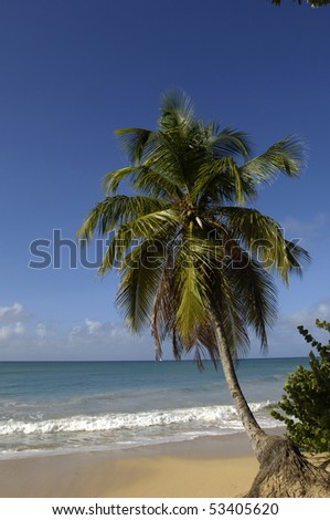 France, Martinique, Sainte Anne, beach of  les Salines