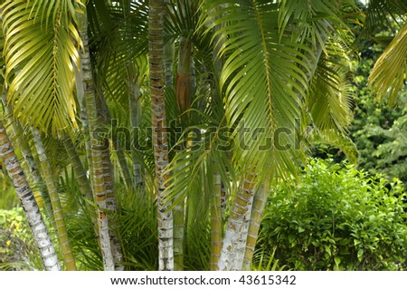 France,palm trees in Martinique