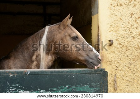 France, the equestrian center of Le Touquet in Nord - stock photo
