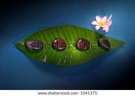frangipane flower with pebble and its green leaf
