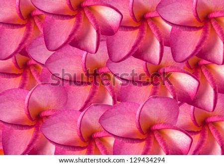 frangipani - stock photo