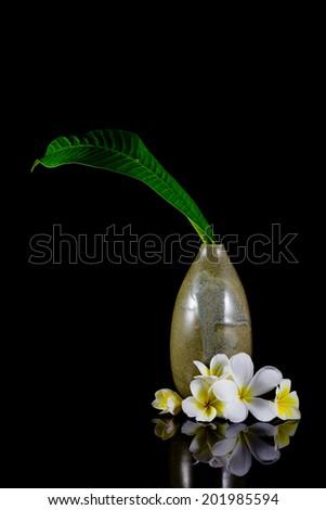 frangipani flower and leaf in vase isolated on black background - stock photo