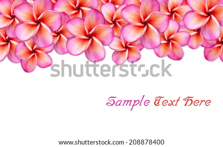 frangipani flower Background with Space for Text  - stock photo
