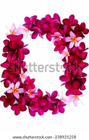 Frangipani flower border isolated on white background - stock photo