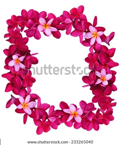 Frangipani flower frame isolated on white background - stock photo