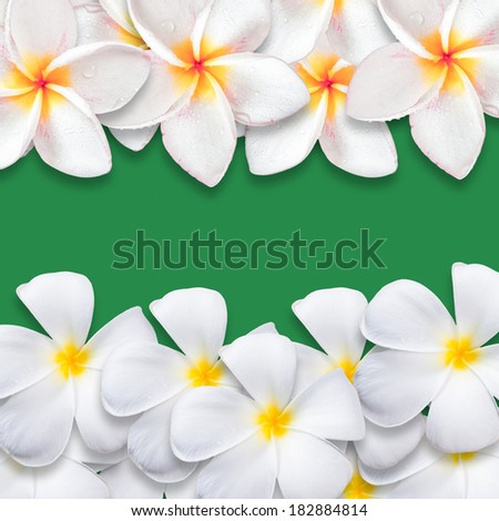 Frangipani flower isolated on green backgound, design for background - stock photo