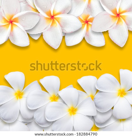Frangipani flower isolated on yellow backgound, design for background - stock photo