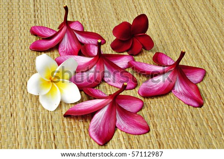 frangipani flower on light brown carpet - stock photo