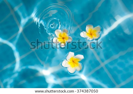 Frangipani flower on the blue water, concept for tropical vacation. - stock photo