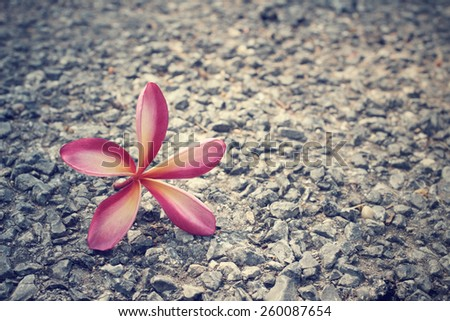 Frangipani flower on the stone - stock photo