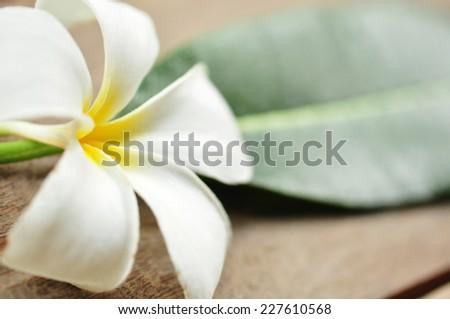 Frangipani flower on wooden floor - stock photo