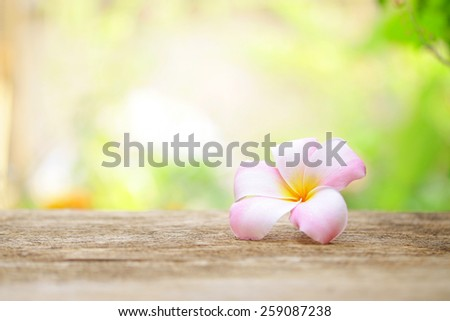 Frangipani flower on wooden table - stock photo