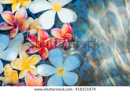 Frangipani flowers colorful tropical scent on water treatment in the health spa is illustrated and paste text. - stock photo