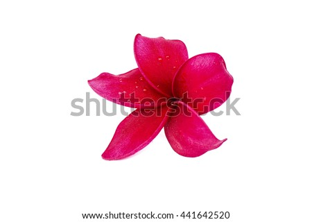 Frangipani flowers in red on white.