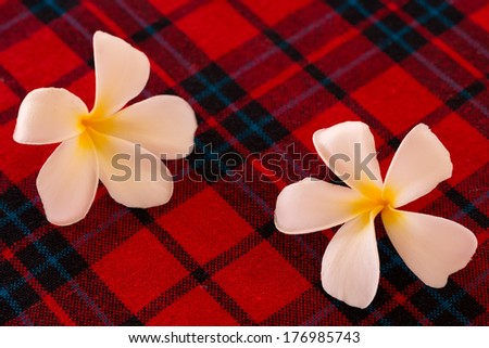 Frangipani flowers on the red table