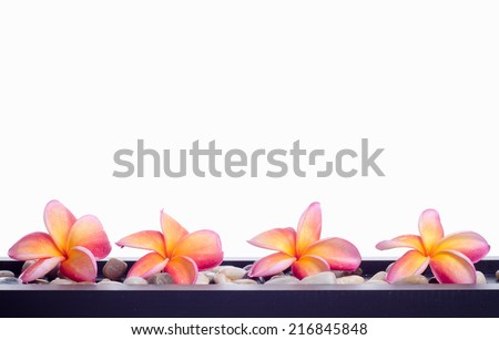 Frangipani flowers: Tropical spa setting suitable for spa related theme isolated on white background - stock photo