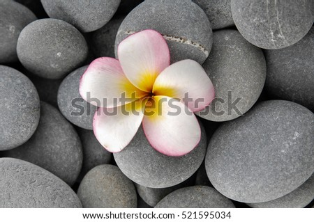 frangipani on gray stones