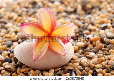 frangipani on top of the stone - stock photo