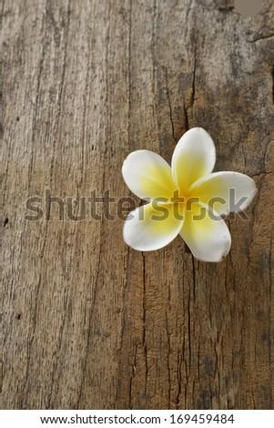 frangipani on wood texture - stock photo