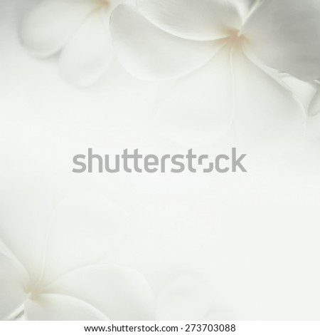 frangipani (plumeria) and sweet flowers in soft color and blur style for background - stock photo