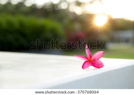 frangipani (plumeria) flower fallen on a wall with sunlight as a background - stock photo