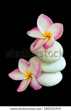 Frangipani (Plumeria) flowers and stones isolated on black - stock photo