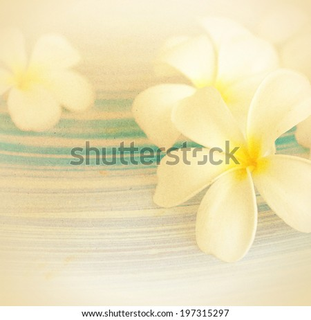 Frangipani (plumeria) in soft color style on craft paper texture