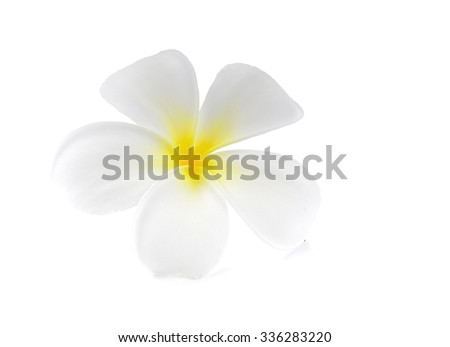 Frangipani plumeria Spa Flower isolated on white - stock photo