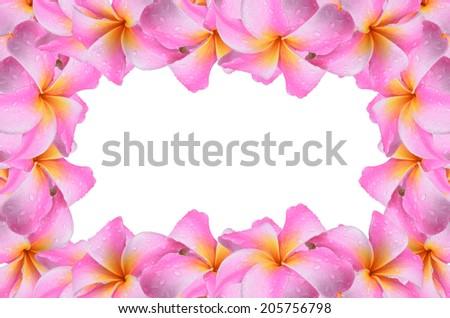 Frangipani, Plumeria, Templetree flowers isolated on white. - stock photo
