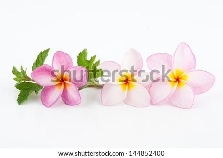 Frangipani, Pumeria, Frangipanni, isolated on white background - stock photo
