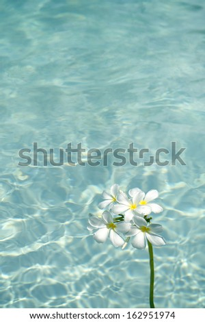 frangipani spa flowers over shiny water background-2 - stock photo