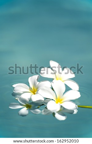 frangipani spa flowers over shiny water background-7 - stock photo