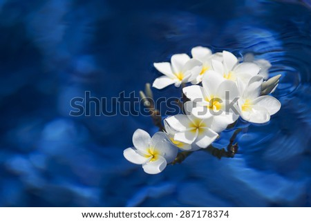 frangipani spa flowers over shiny water background-1 - stock photo