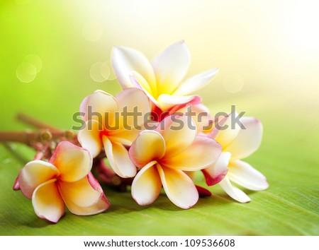 Frangipani Spa Plumeria Flowers - stock photo