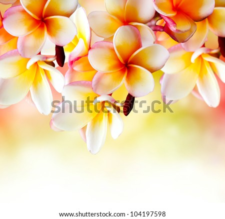 Frangipani Tropical Spa Flower. Plumeria Border Design - stock photo