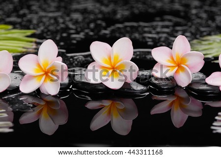 frangipani with palm and black wet pebbles  - stock photo