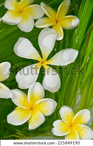 frangipani with palm leaf on wet - stock photo