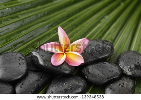 frangipani with wet spa stones on palm leaf texture - stock photo