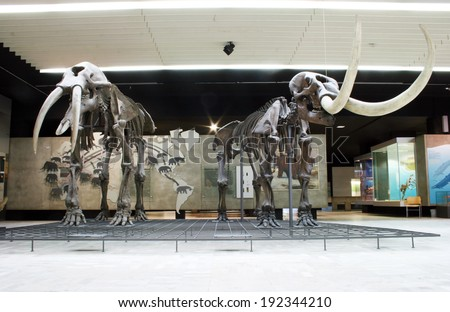 FRANKFURT AM MAIN, GERMANY, MAY The 5th 2014: The Senckenberg Museum is one of the largest Natural History Museums in Germany and exhibits the recent biodiversity of life and evolution of organisms.