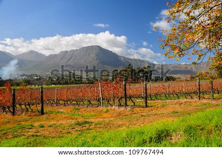 Franschhoek wineland area, South Africa - stock photo