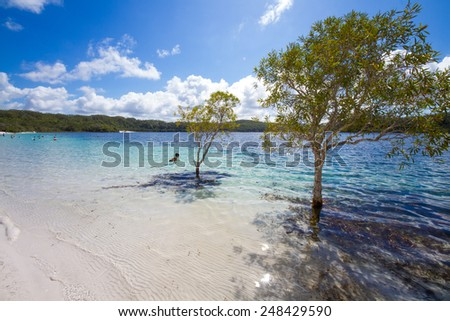 Fraser Island Lake Mckenzie - stock photo